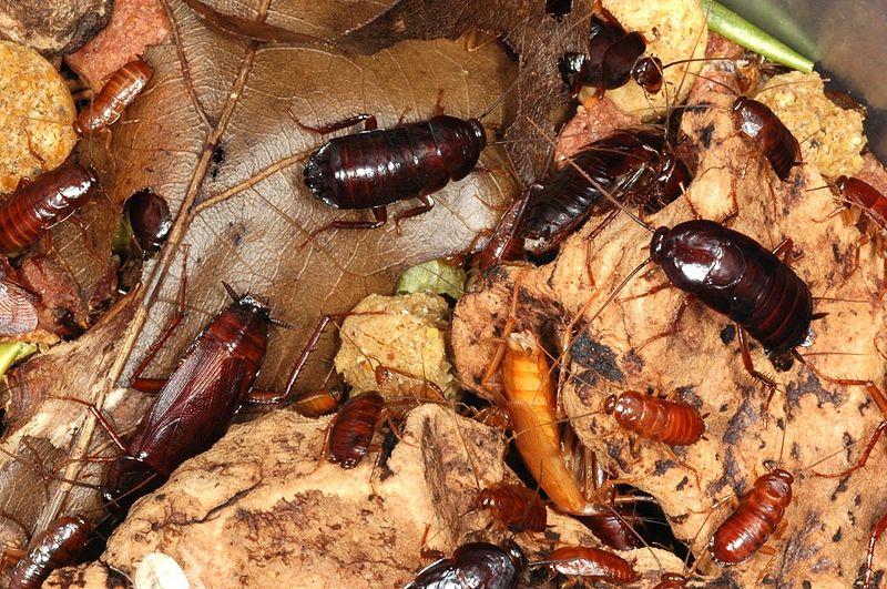 Assez Extermination de blattes et cafards sur Toulouse - Guêpe Buster LD29