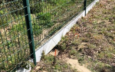 Piègeages des ragondins sur Castelmaurou Mars 2021