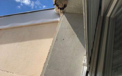 Destruction nid de frelon asiatique